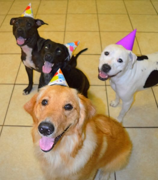 Pet Birthday Parties